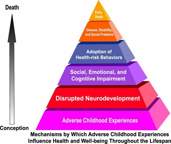 Mechanisms by which Adverse Childhood